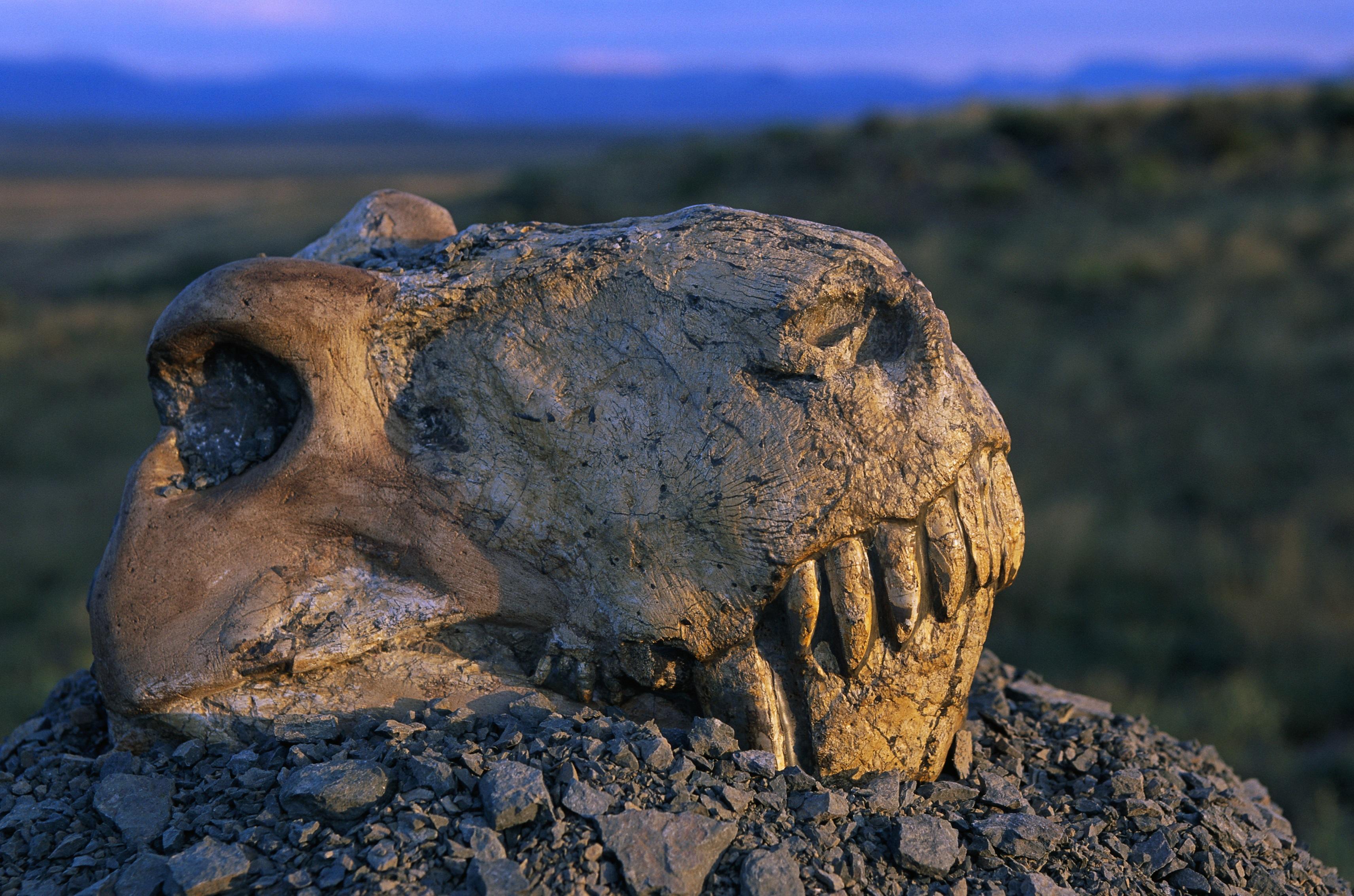 Найдена возможная причина самого масштабного вымирания в истории