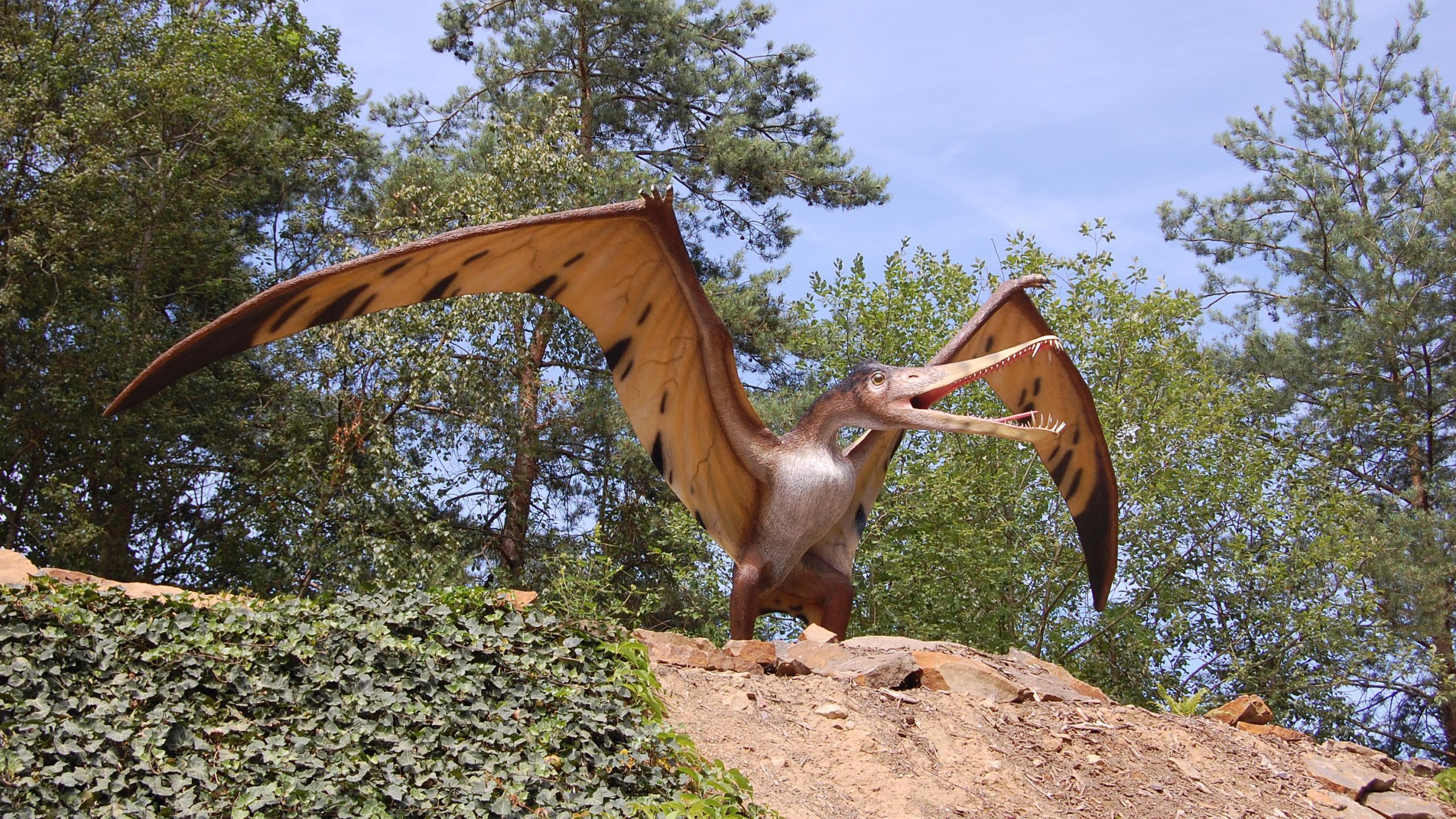 Выяснилось, как птерозавры учились летать