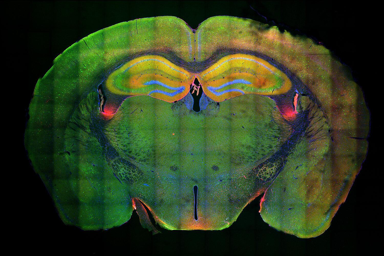 Молекулярные механизмы формирования памяти. Новые данные