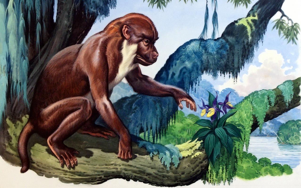 Способность к языку у наших предков появилась еще 40 миллионов лет назад