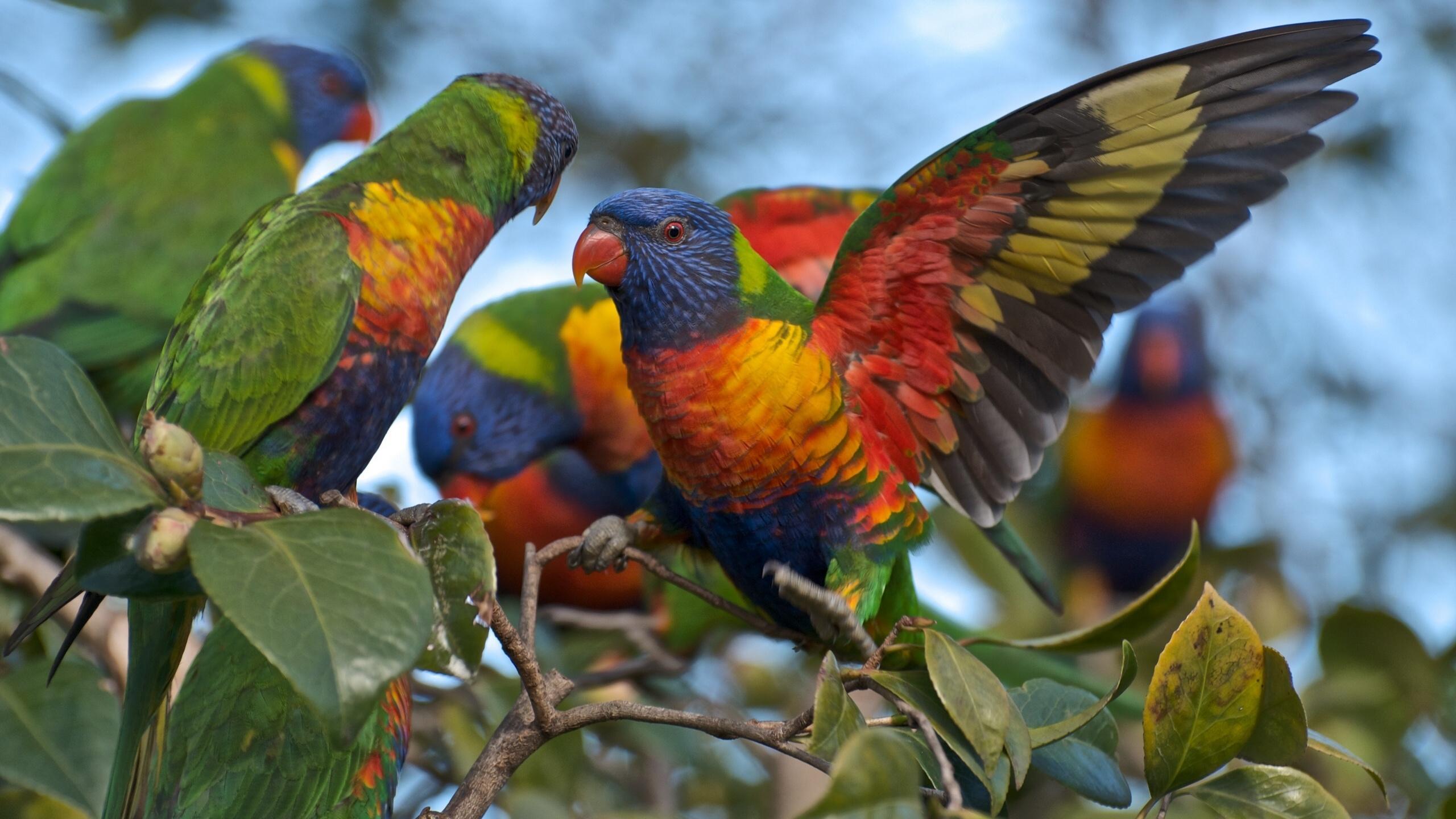 Первые островные поселенцы истребили экзотических птиц