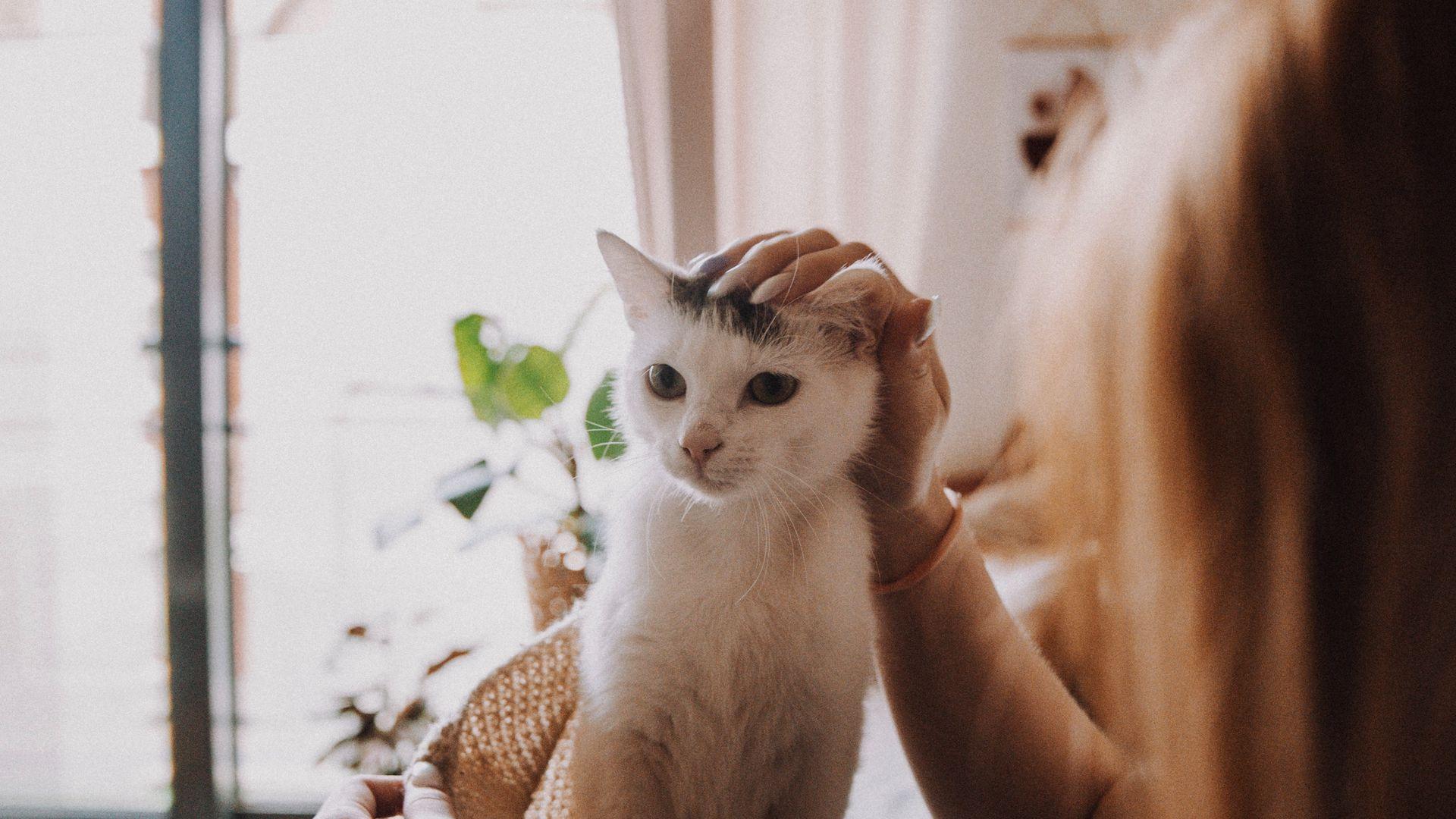Психологи рассказали о способе наладить контакт с кошкой