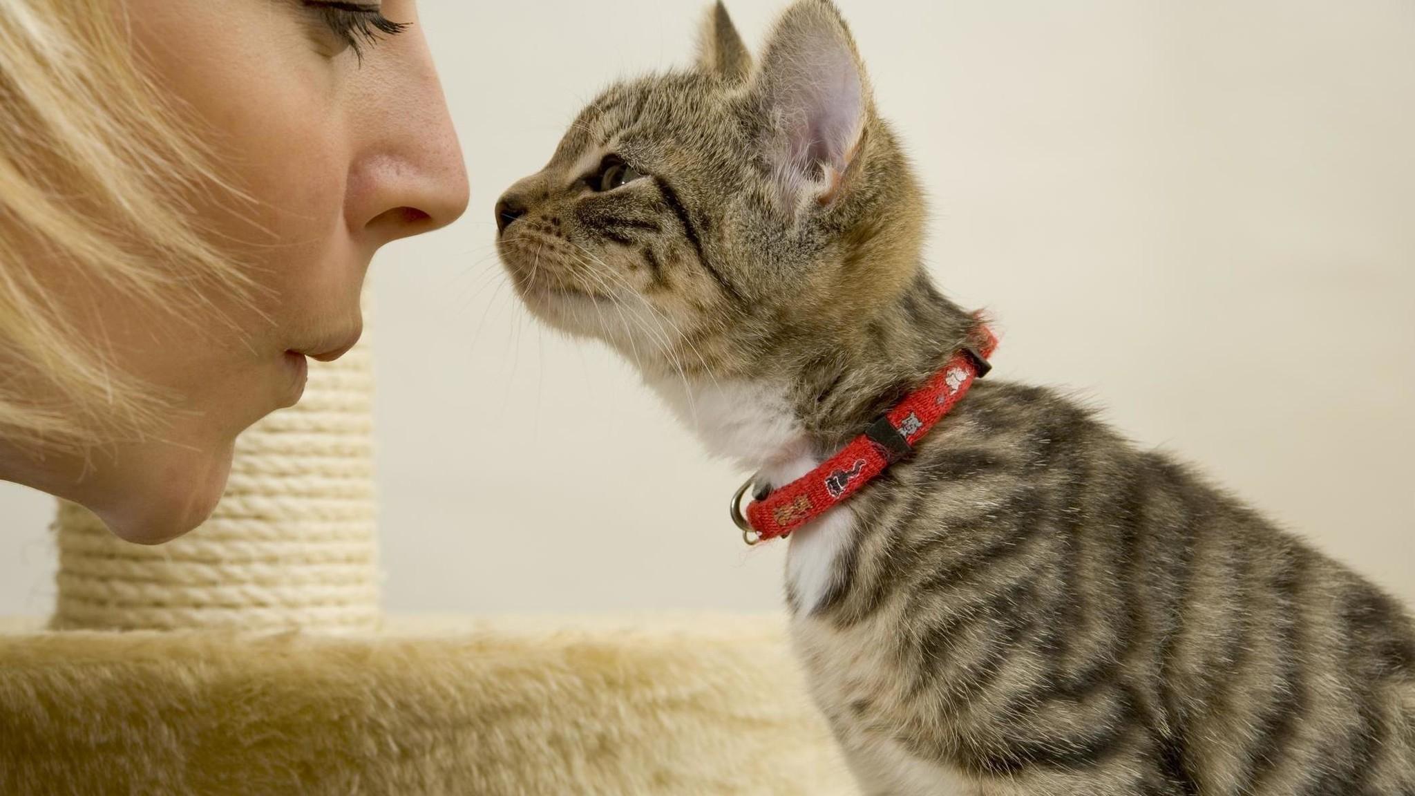 Кошки могут повторять действия человека