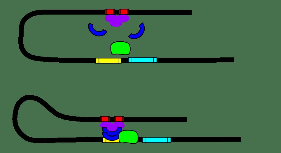 Найден молекулярный механизм, который формирует воспоминания