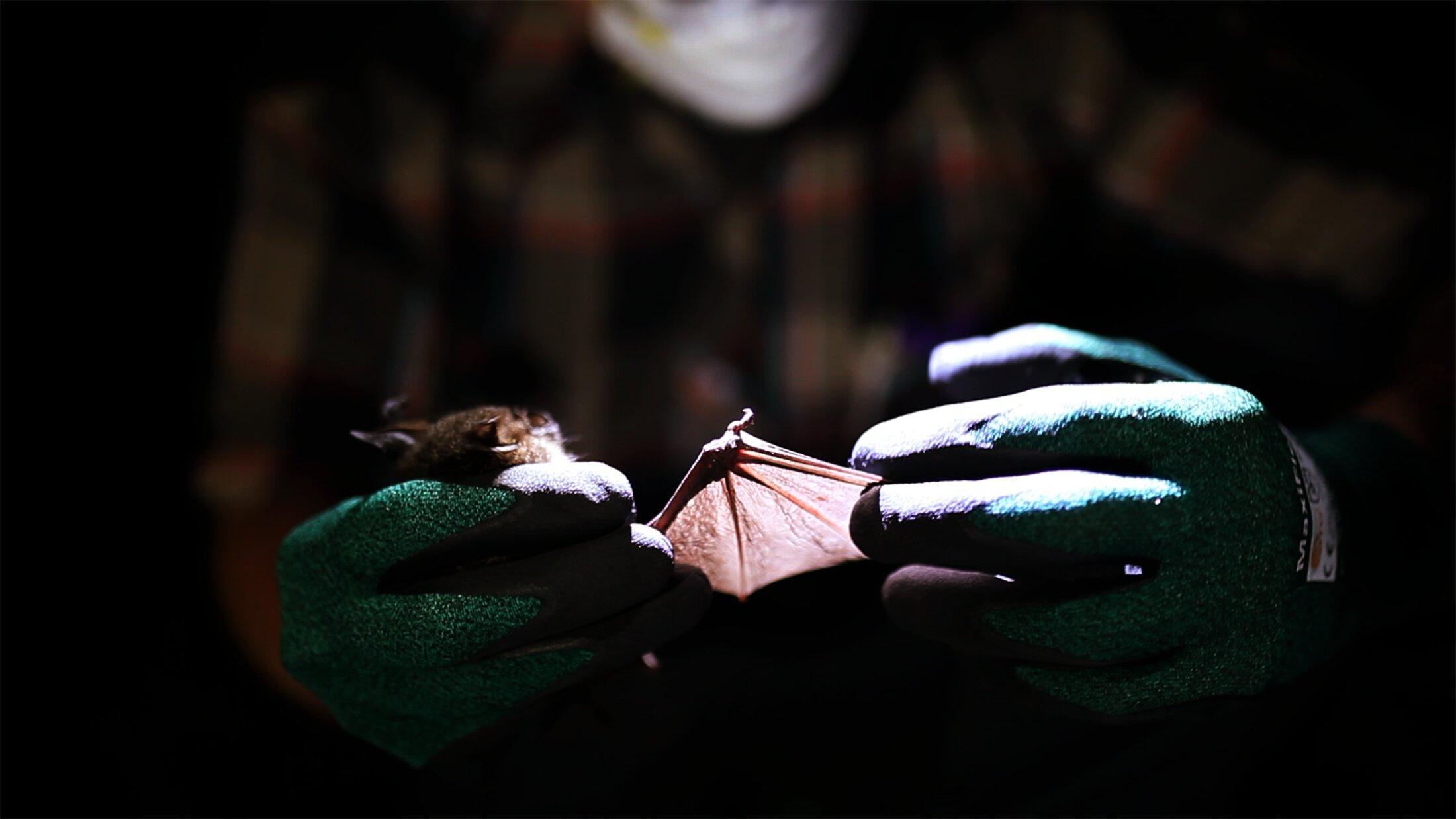 Биологи впервые обнаружили «родственников» вируса краснухи
