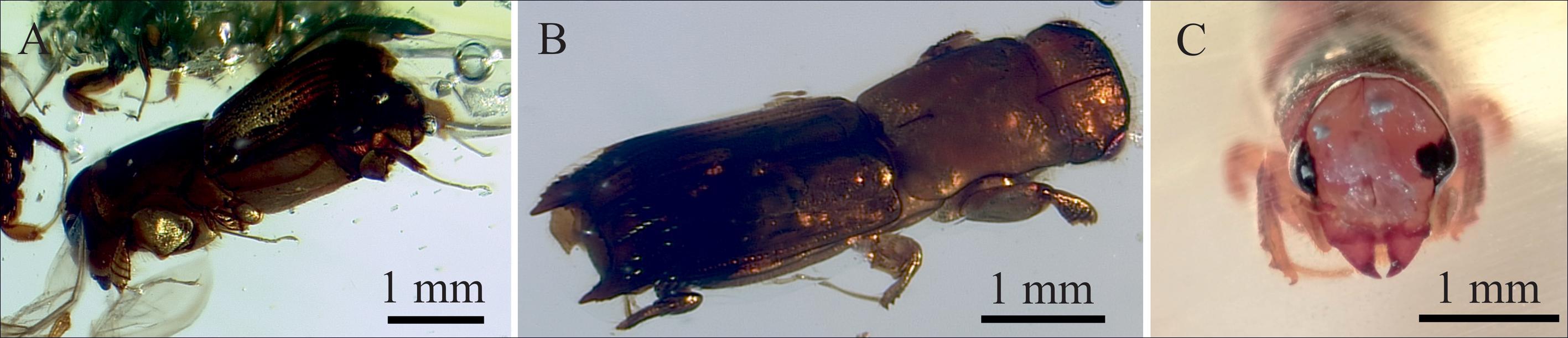 Ученые впервые извлекли ДНК насекомых из смолы