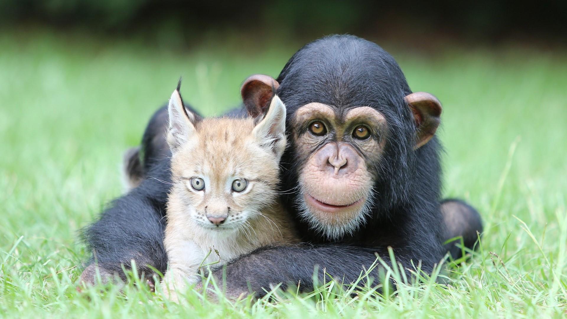 Взаимодействие животных с другими видами может сделать их умнее