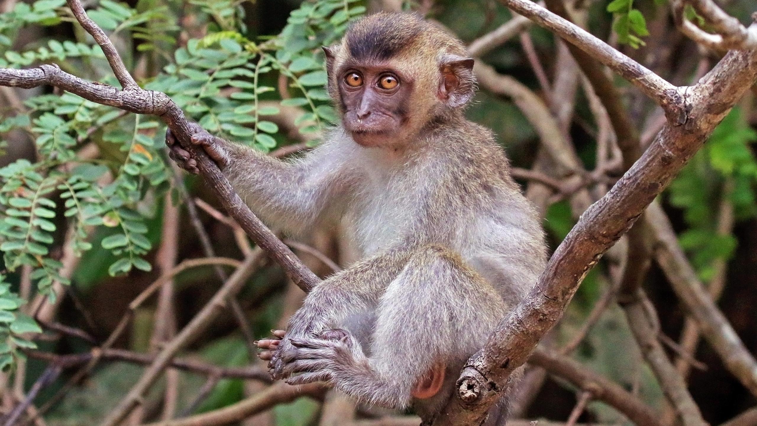 Ученые предупредили о росте численности инвазивных видов более чем на 30% к 2050 году