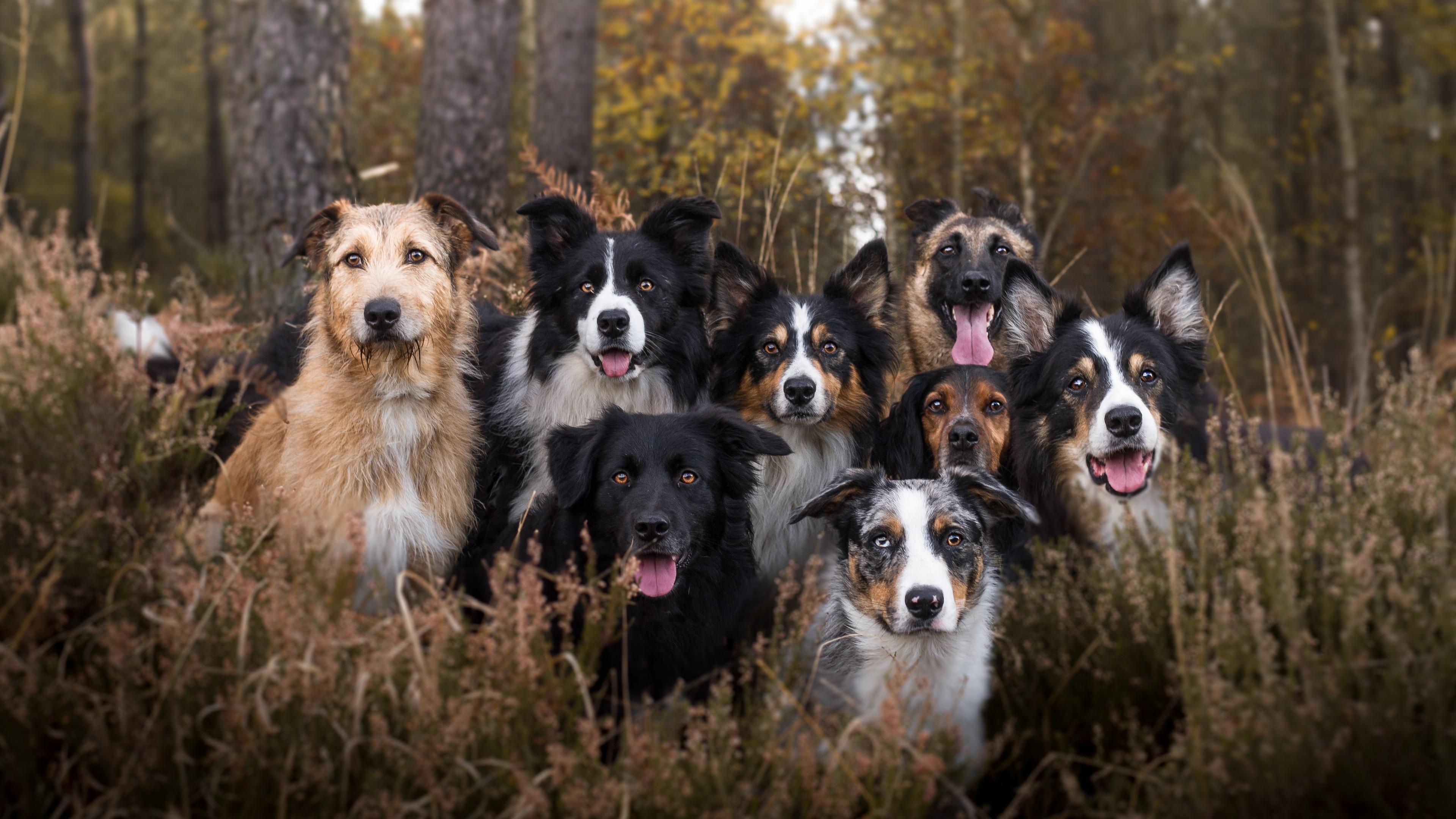 Различные типы собак существовали уже 11 тысяч лет назад