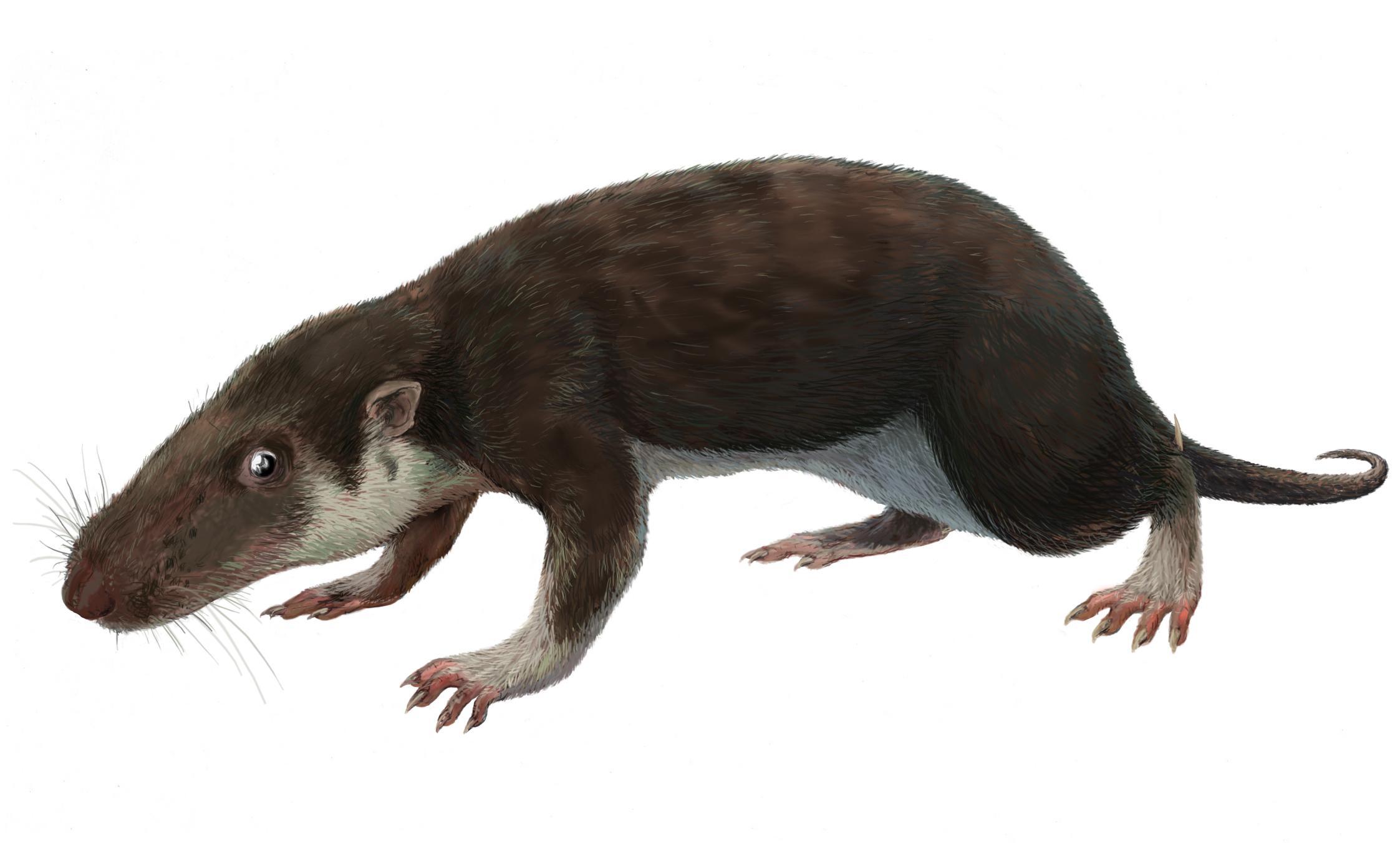 Образ жизни древних млекопитающих оказался таким же, как у рептилий