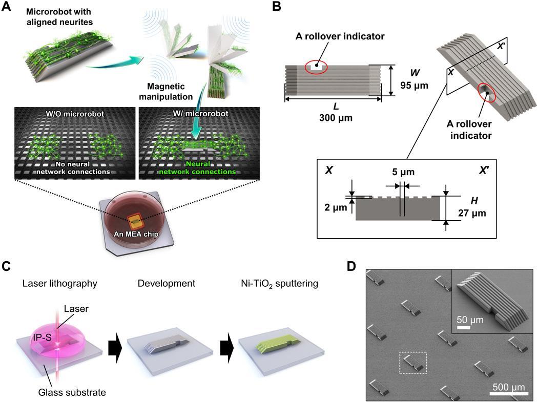 «Биостанции» из микророботов помогут восстанавливать связи между нейронами