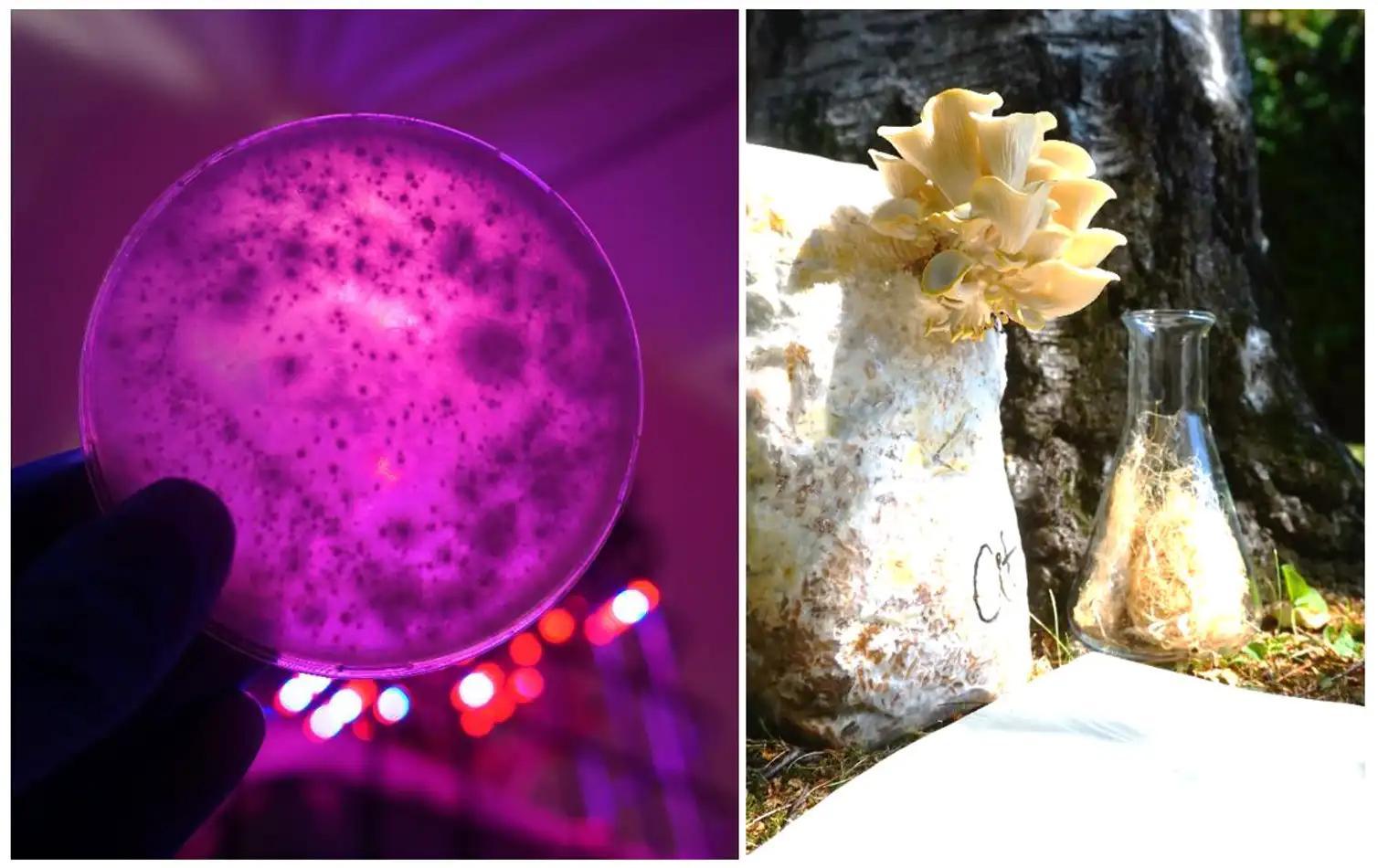 Будущее экомоды: веганская кожа из грибов