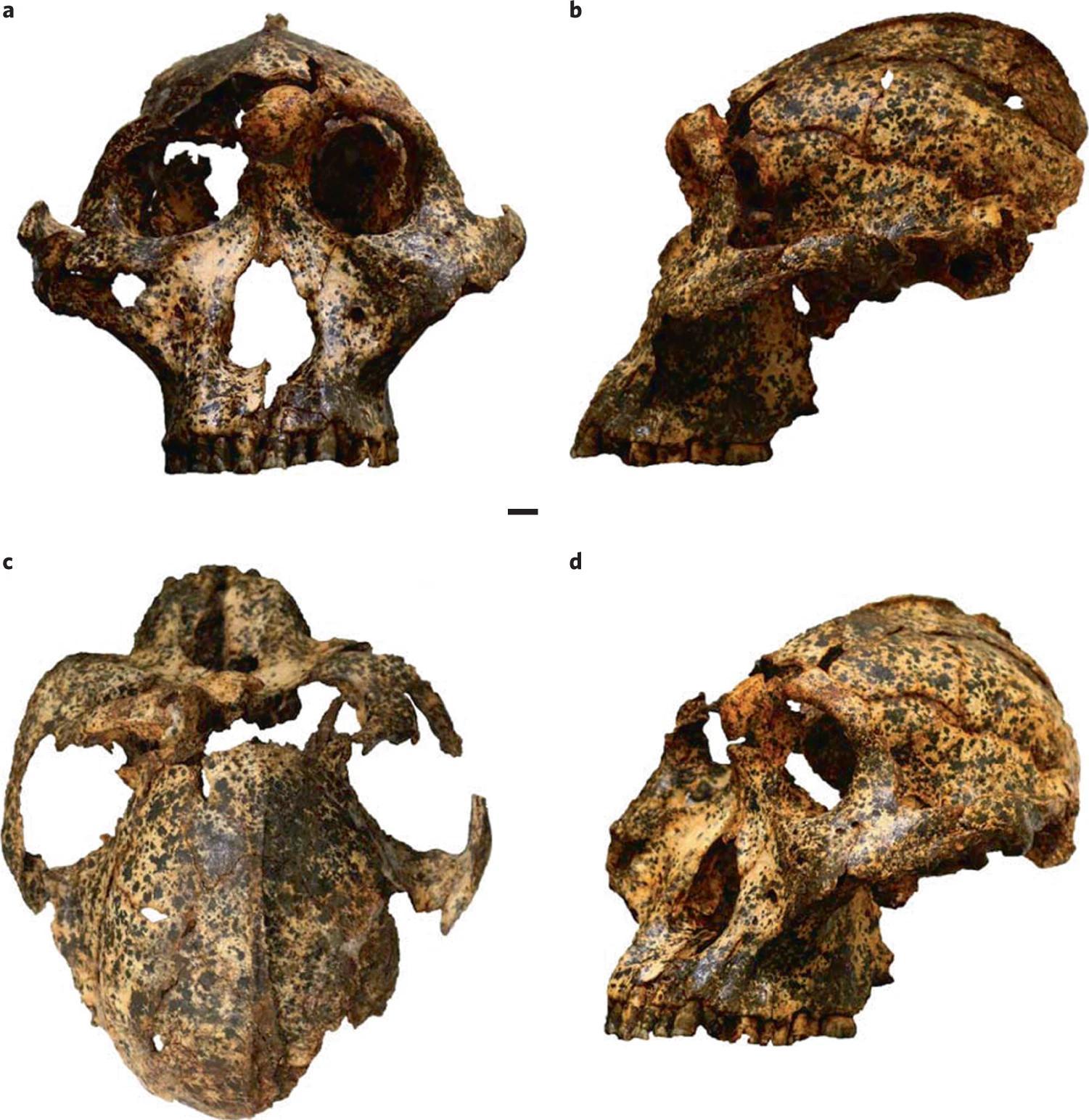 Ученые выяснили, в каких условиях формировались ранние Homo