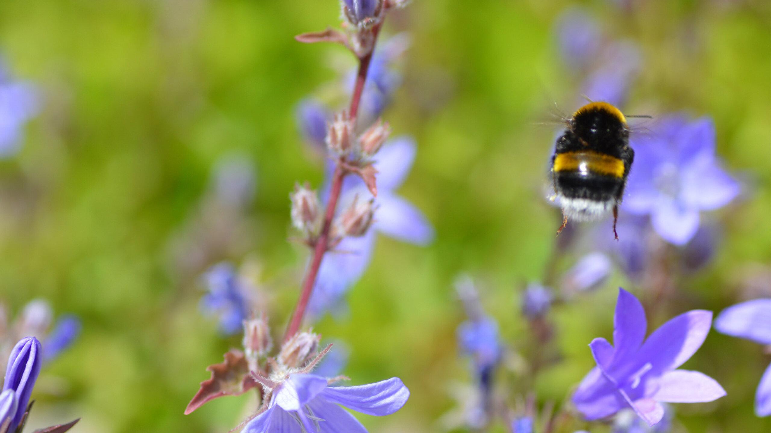 Пчелы оказались способны осознавать размеры и форму собственного тела
