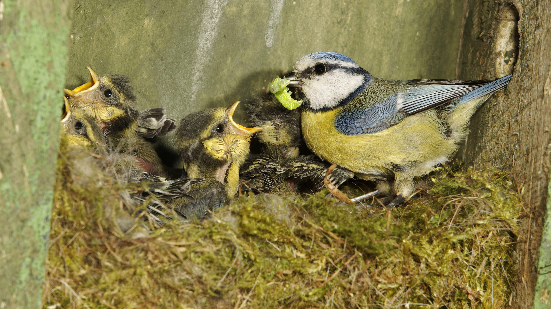 Световое загрязнение в городах помогло птицам давать больше потомства