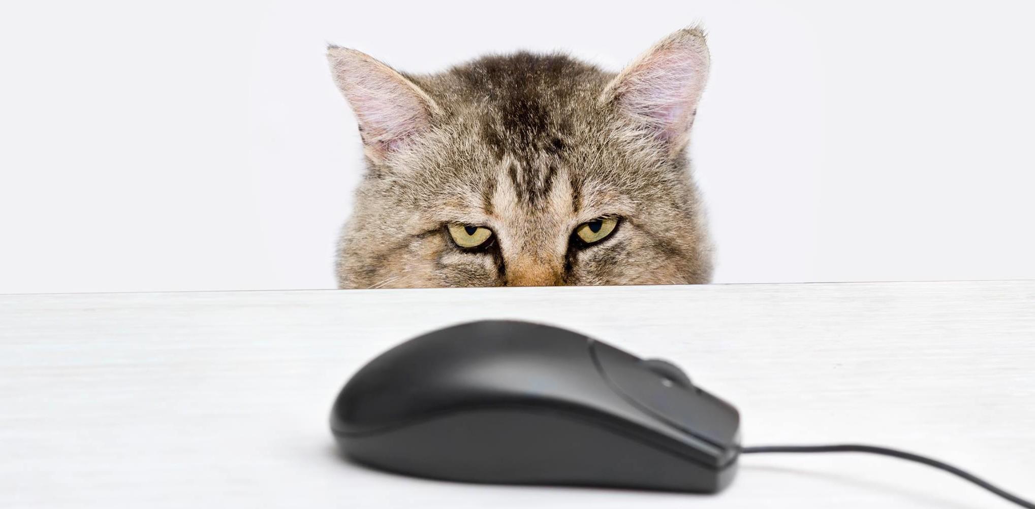 Любителей риска выдаёт мышь