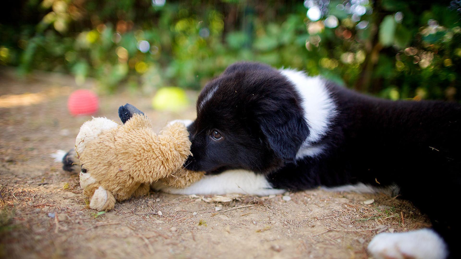 Собаки зависят от «мнения» своего хозяина