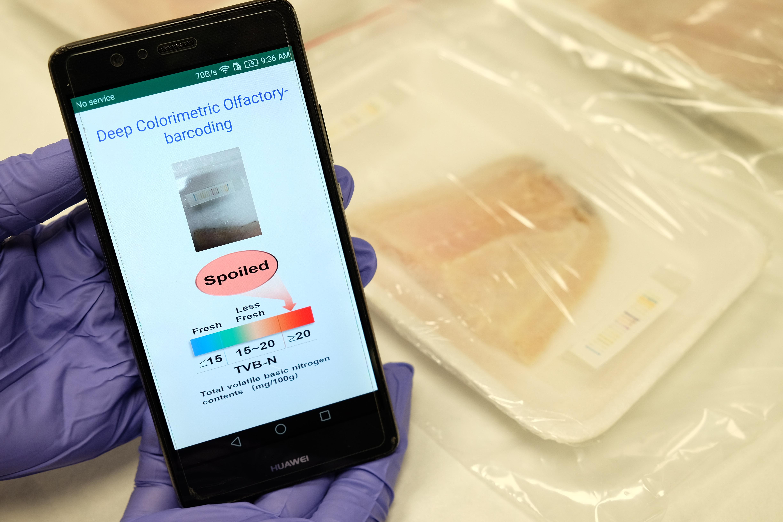 «Электронный нос» на базе искусственного интеллекта распознаёт свежесть мяса