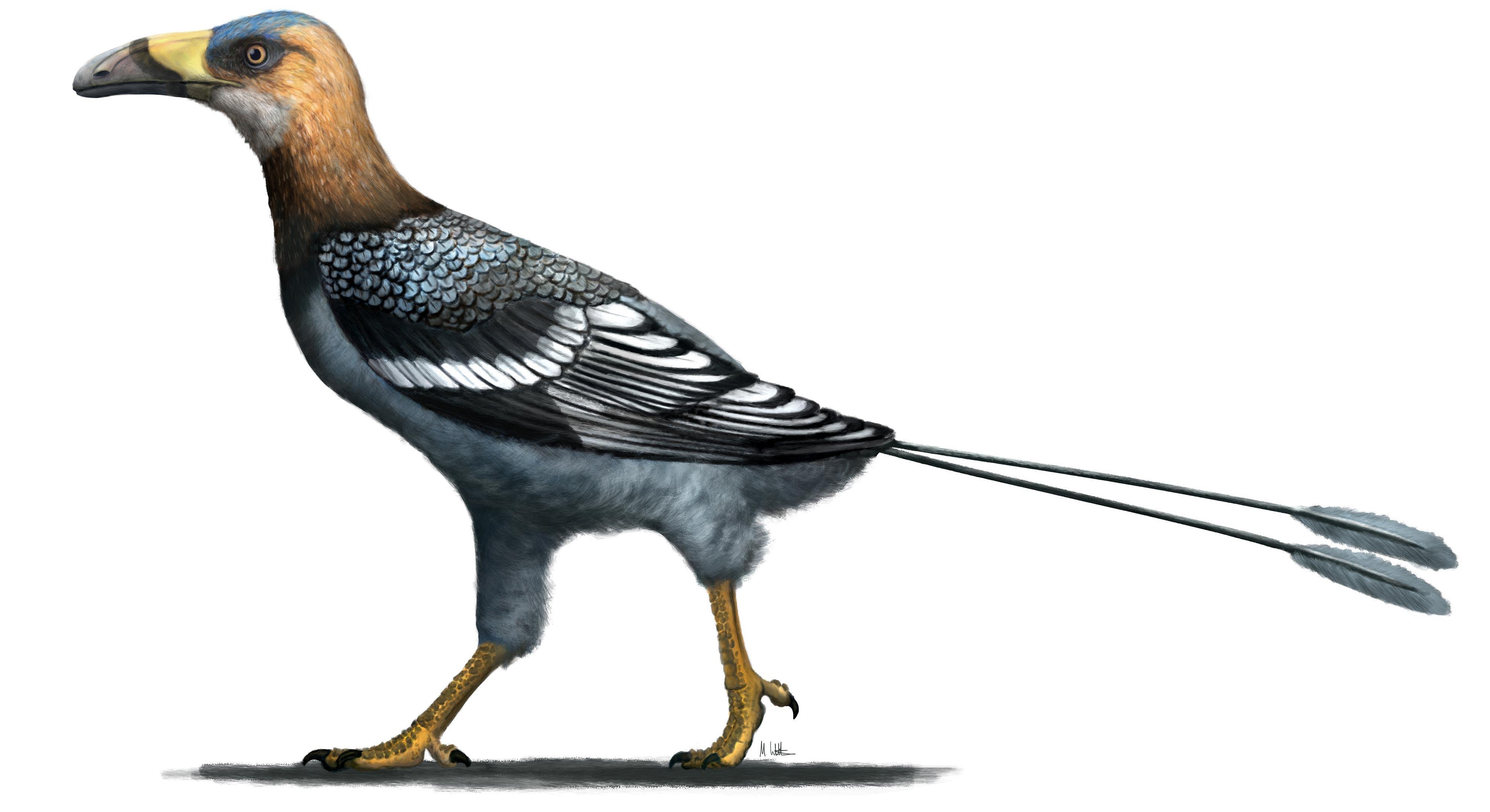 Найдена древняя крошечная птица, похожая на тукана
