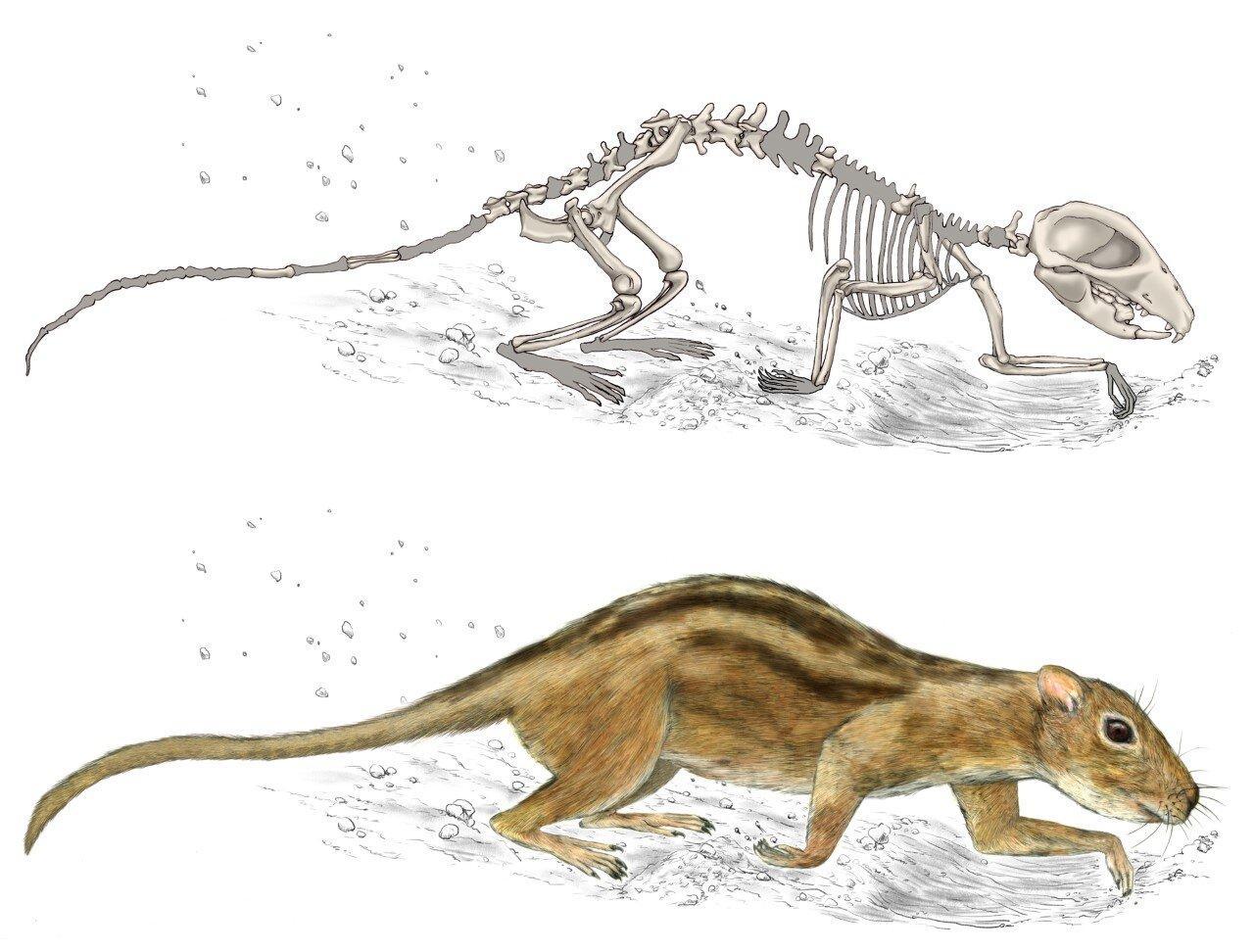 Обнаружен самый ранний пример социального поведения у млекопитающих