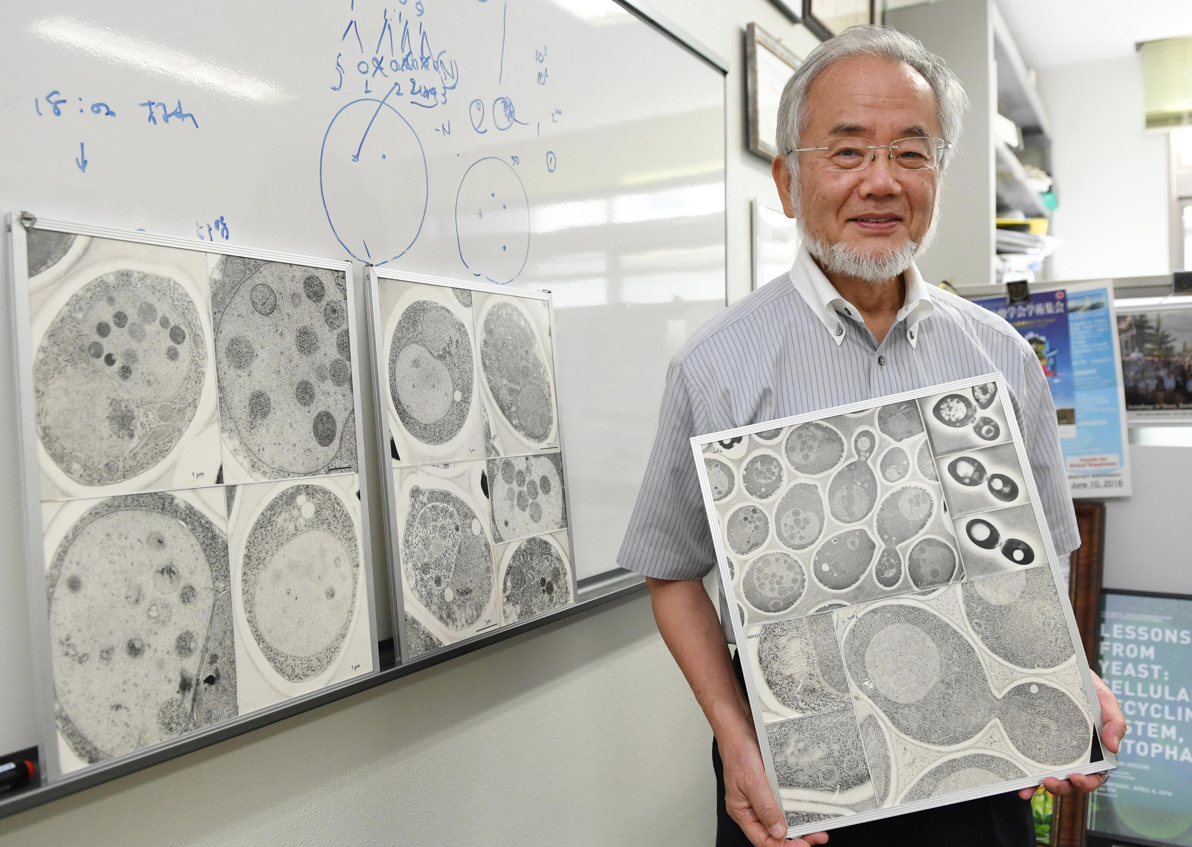 Нобелевская премия 2016 по физиологии или медицине глазами нейроучёного