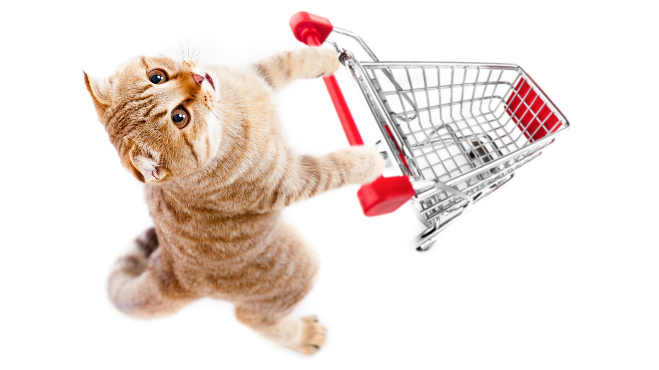 Что нужно купить, если вы решили завести кошку?