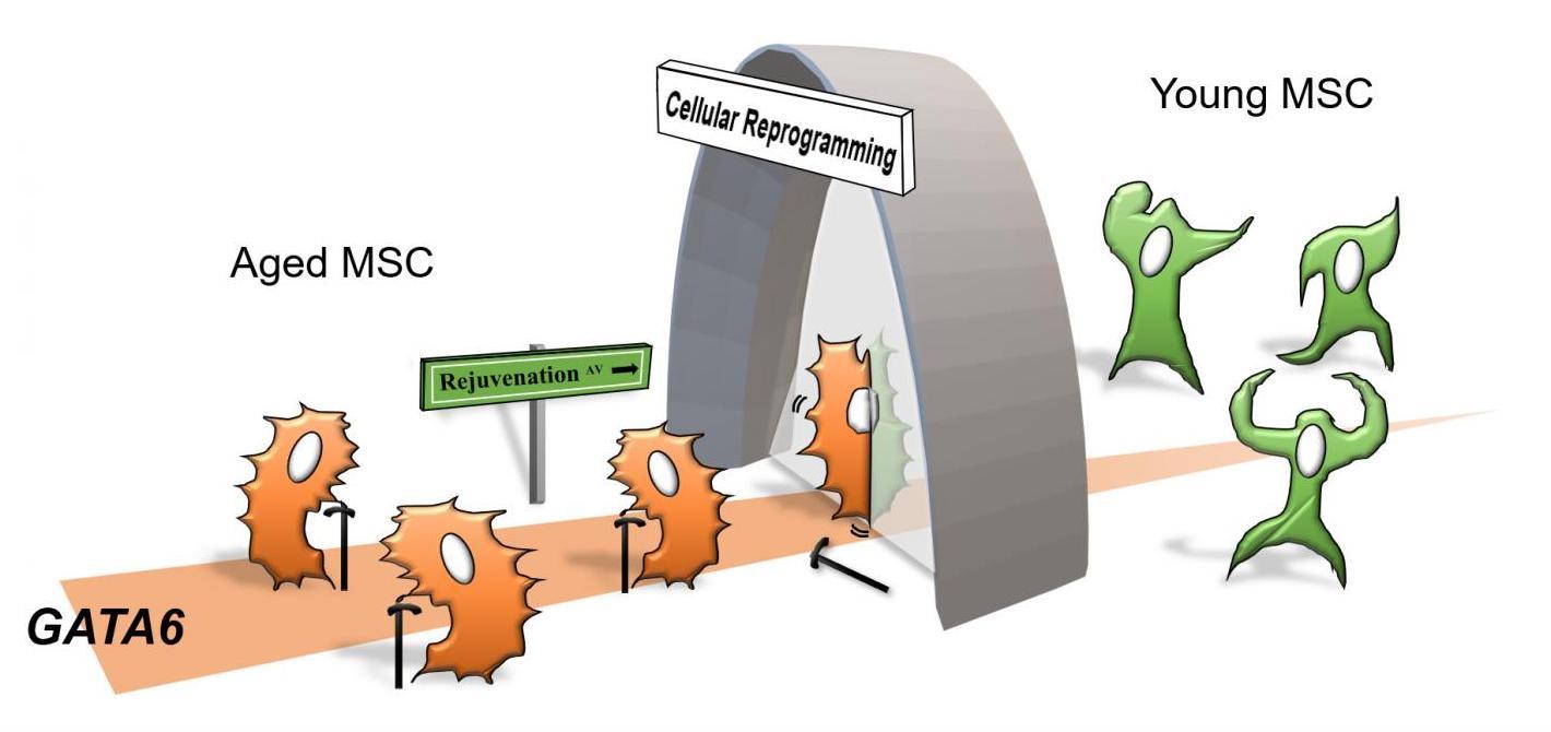 Ученые определили ген, ответственный за клеточное старение