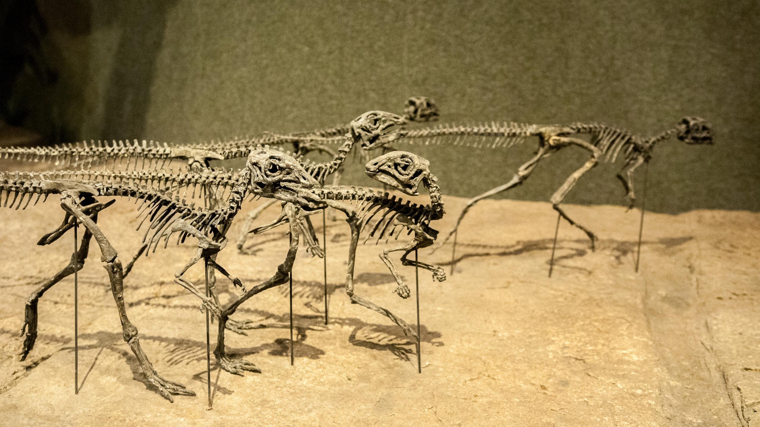 Массовые вымирания могут быть цикличны