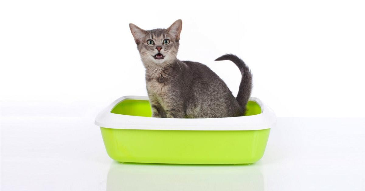 Как понять что у вашего кота мочекаменная болезнь?
