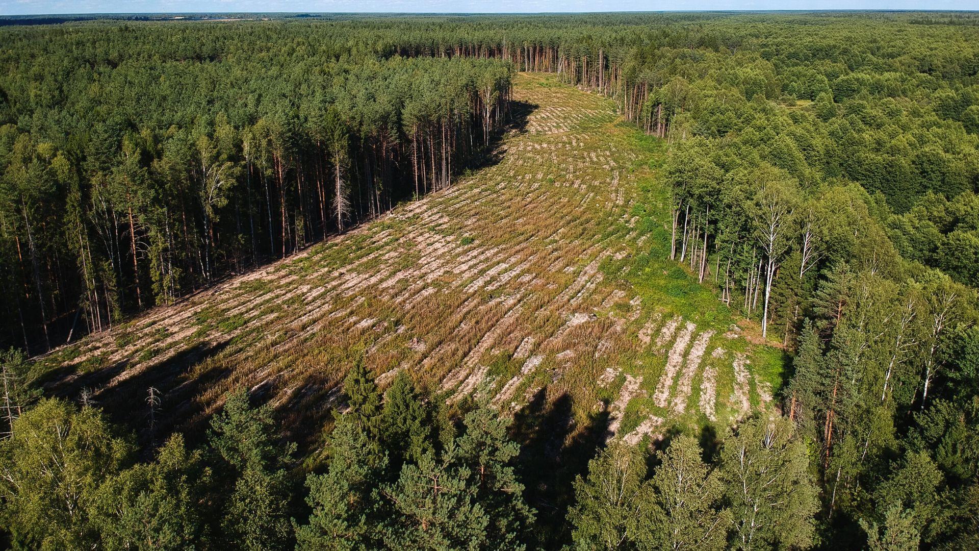 Экологические проблемы как причина будущих эпидемий