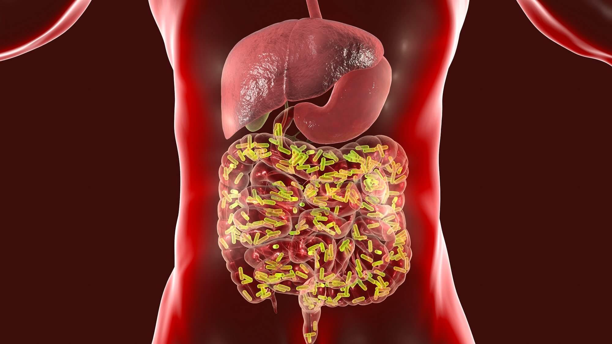 Найден один из механизмов влияния кишечных бактерий на настроение