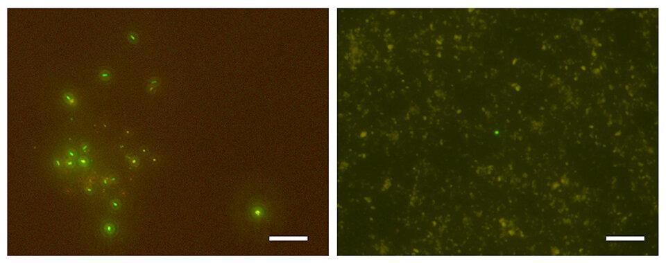 Биологи нашли микробов, живущих на километр ниже морского дна