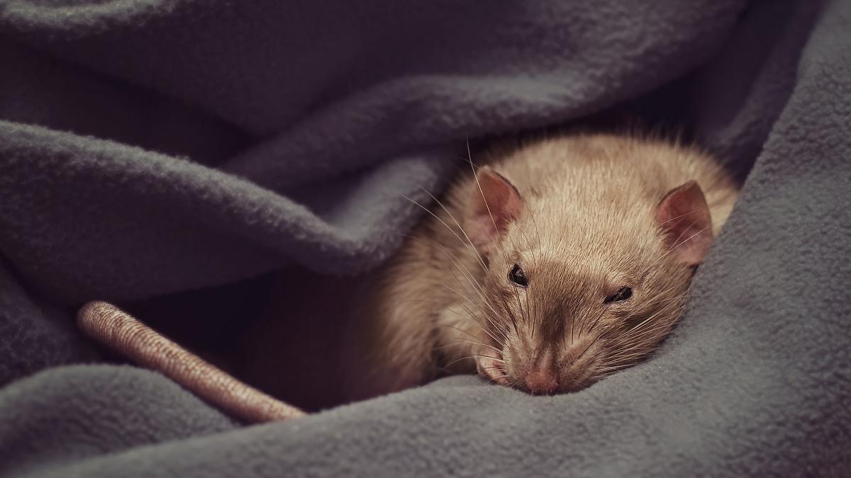 Кишечные бактерии влияют на сон