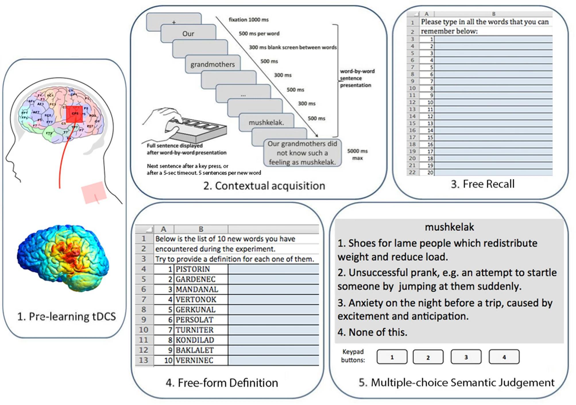 Катодная электростимуляция мозга в области зоны Вернике может помочь лучше запоминать абстрактные слова