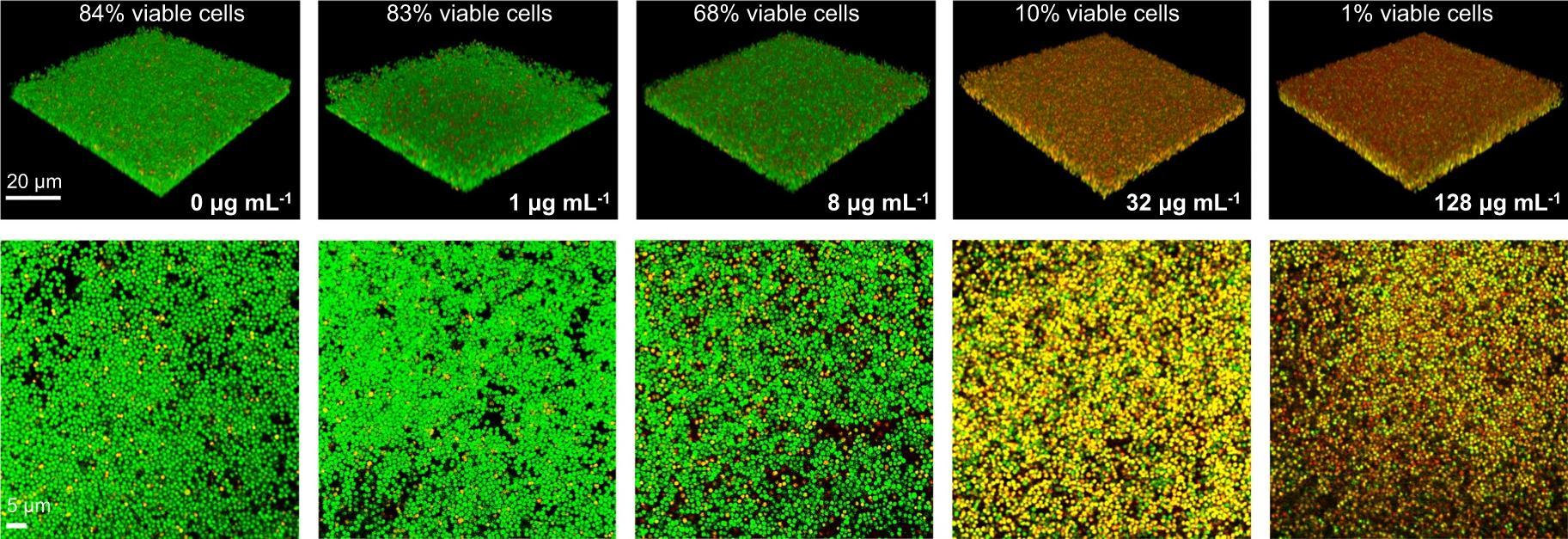 Молекулярные биологи обнаружили антибактериальные свойства у каннабидиола
