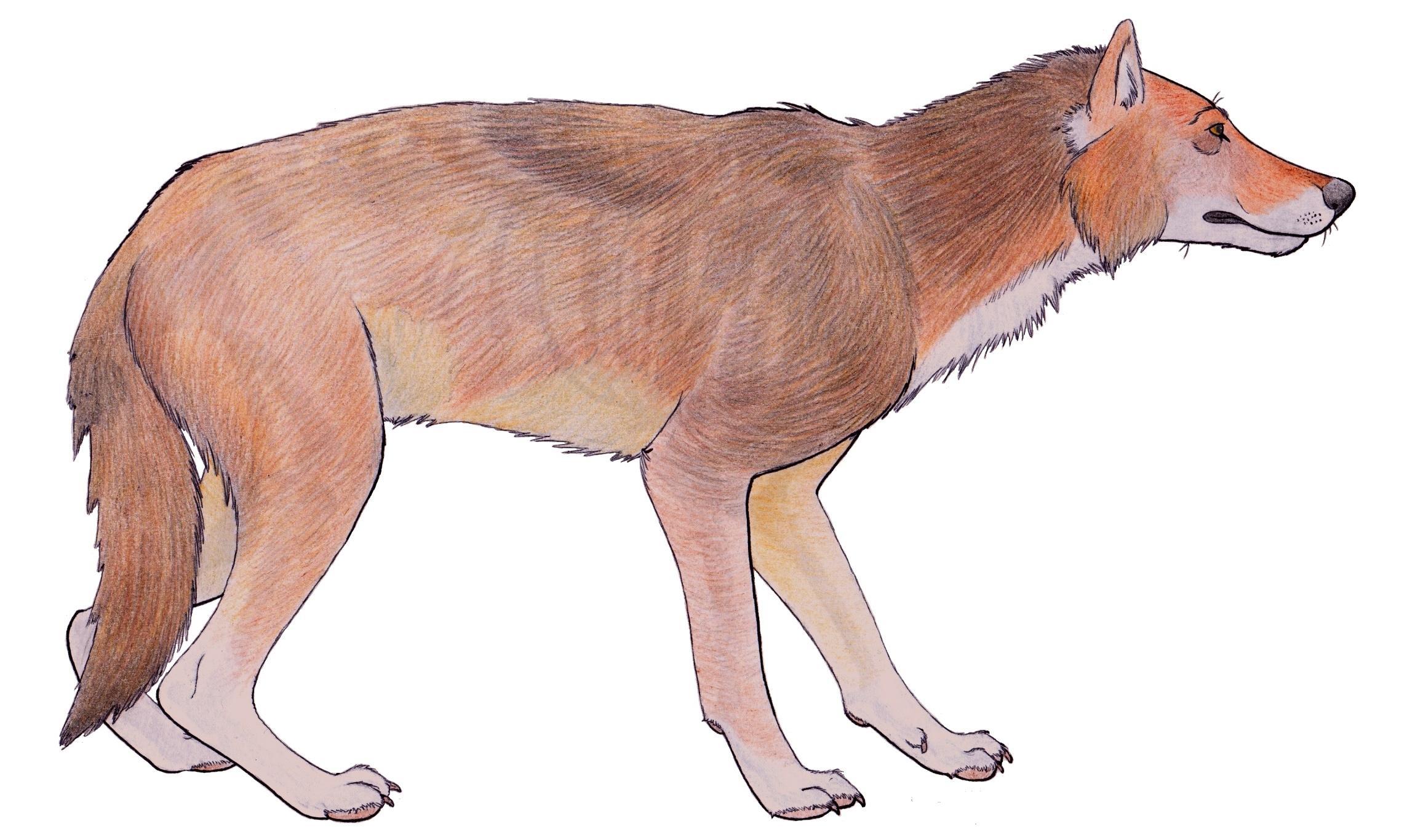 Ужасный волк оказался не волком
