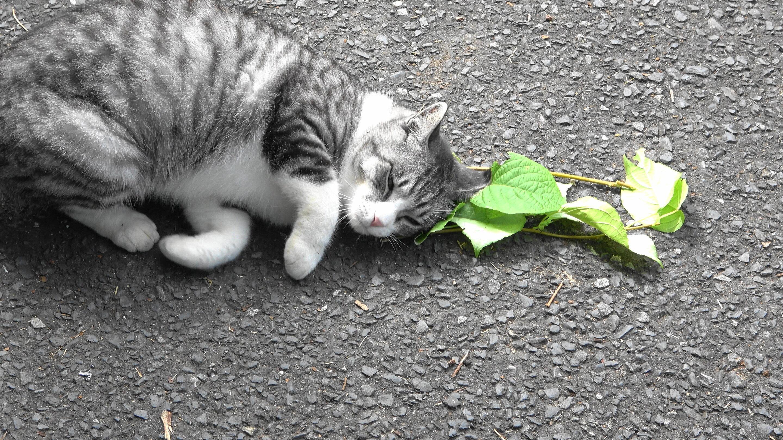 Кошки помогли описать еще один природный репеллент