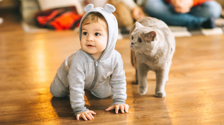 Общение с кошками оказалось полезным для детей с аутизмом
