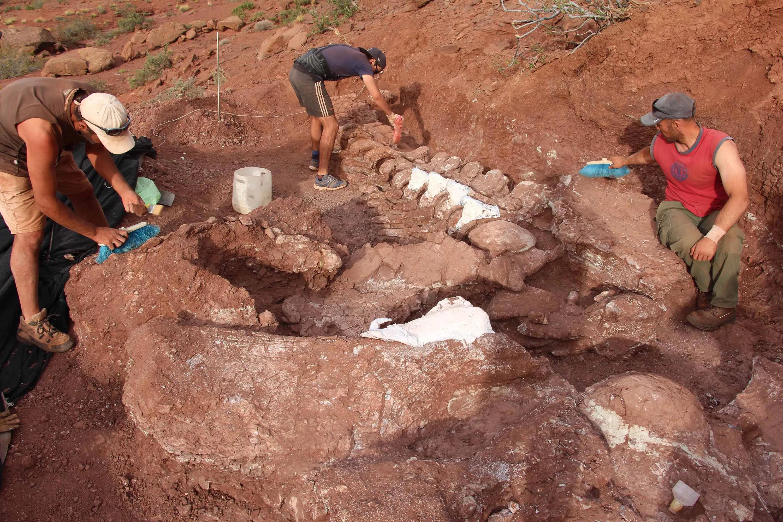 Найдены останки, возможно, самого крупного динозавра в истории