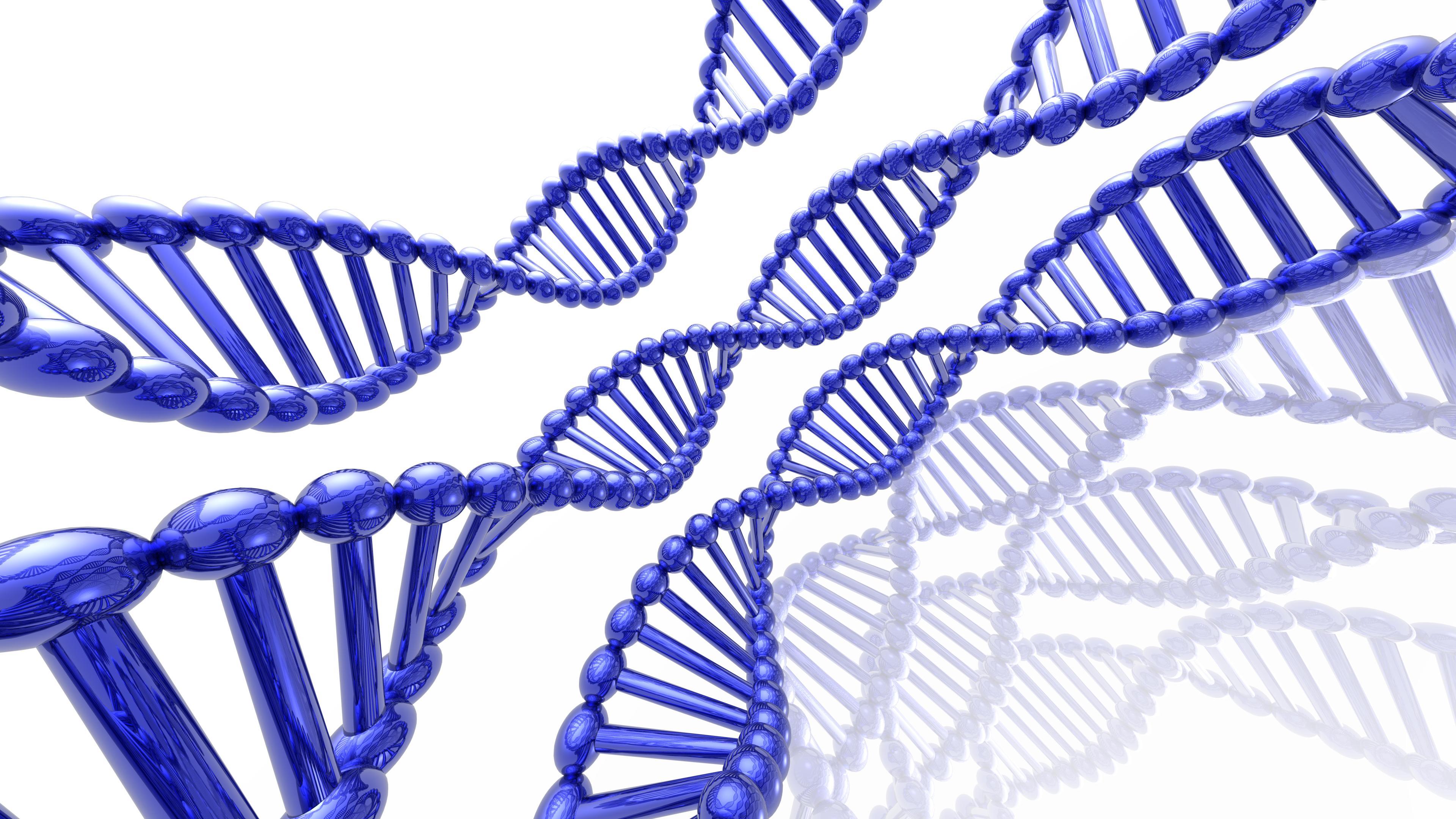 Когнитивные способности всё-таки «зашиты» в генах?