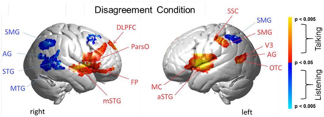 Споры с собеседником заставили некоторые области мозга работать активнее