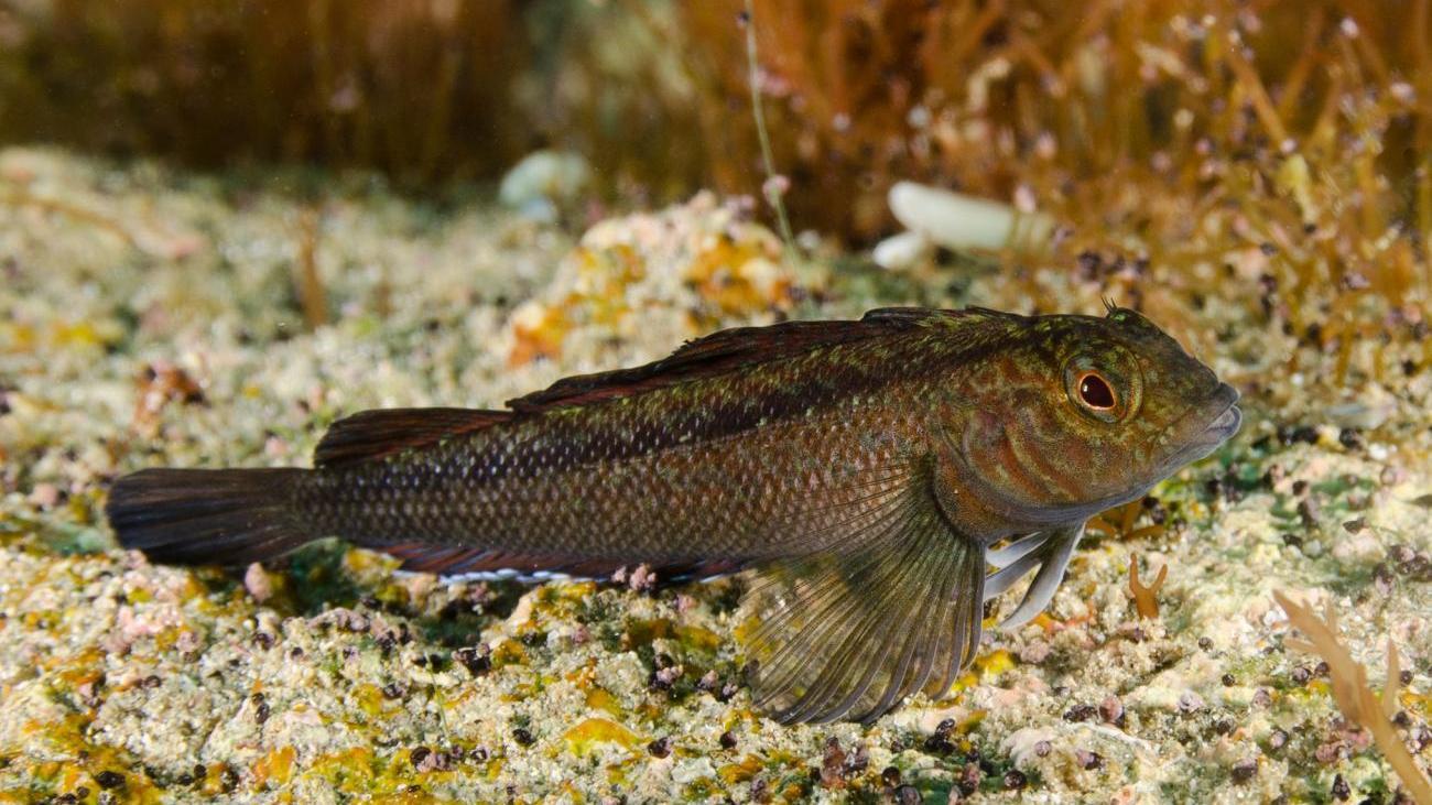 Выбросы в атмосферу превращают рыб в половых гигантов