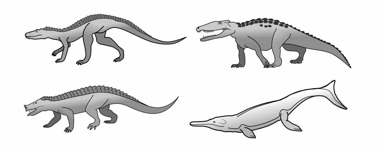 Исследователи объяснили, почему крокодилы так мало изменились со времен динозавров
