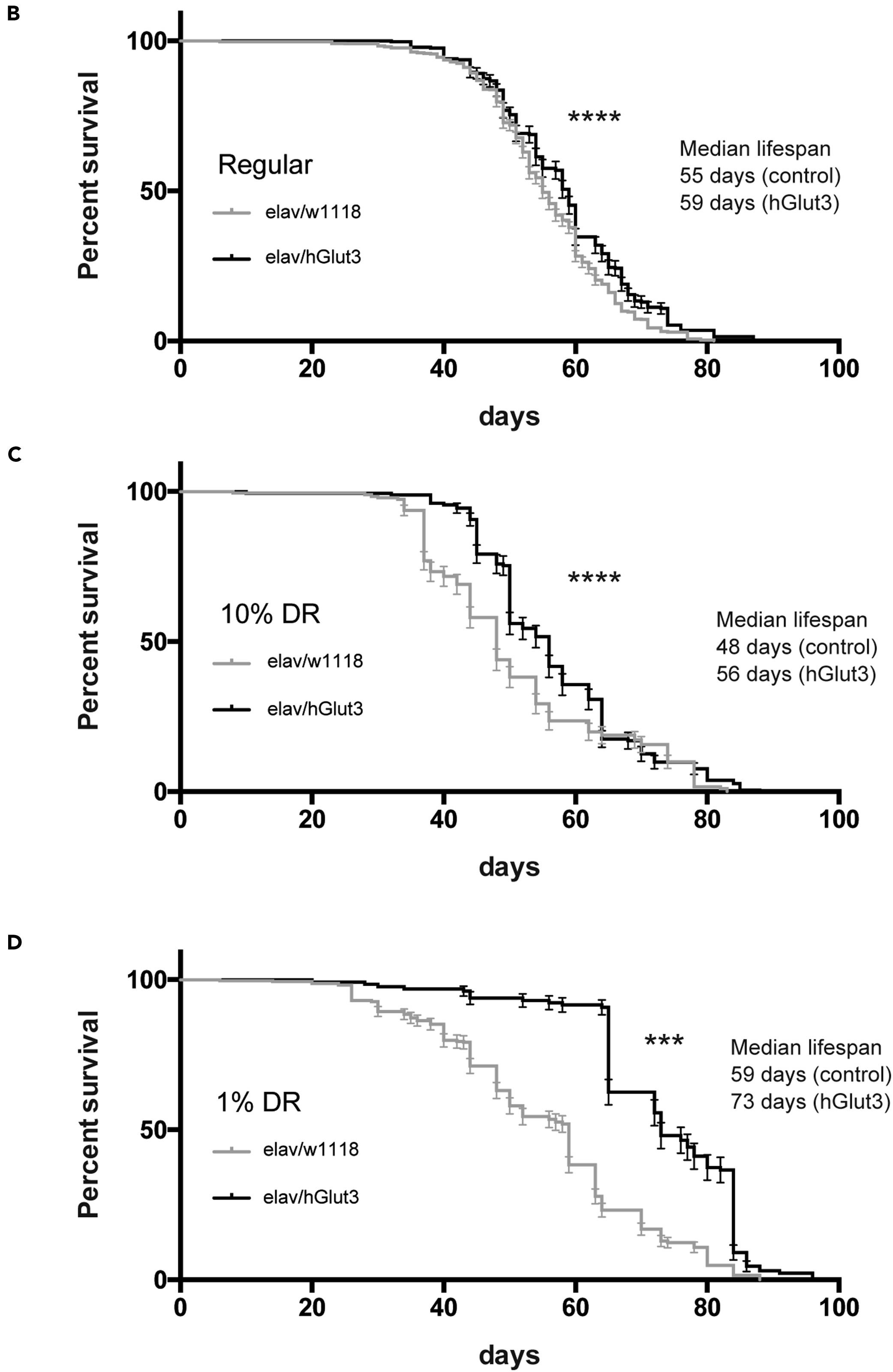 Больше глюкозы в нейроне – дольше продолжительность жизни