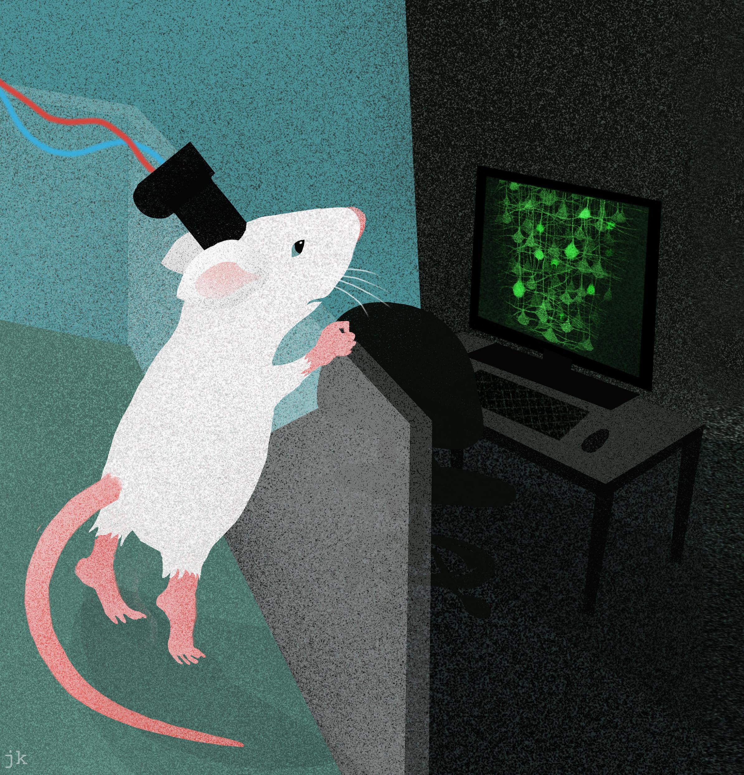 Как увидеть работу мозга во время движения во всей полноте