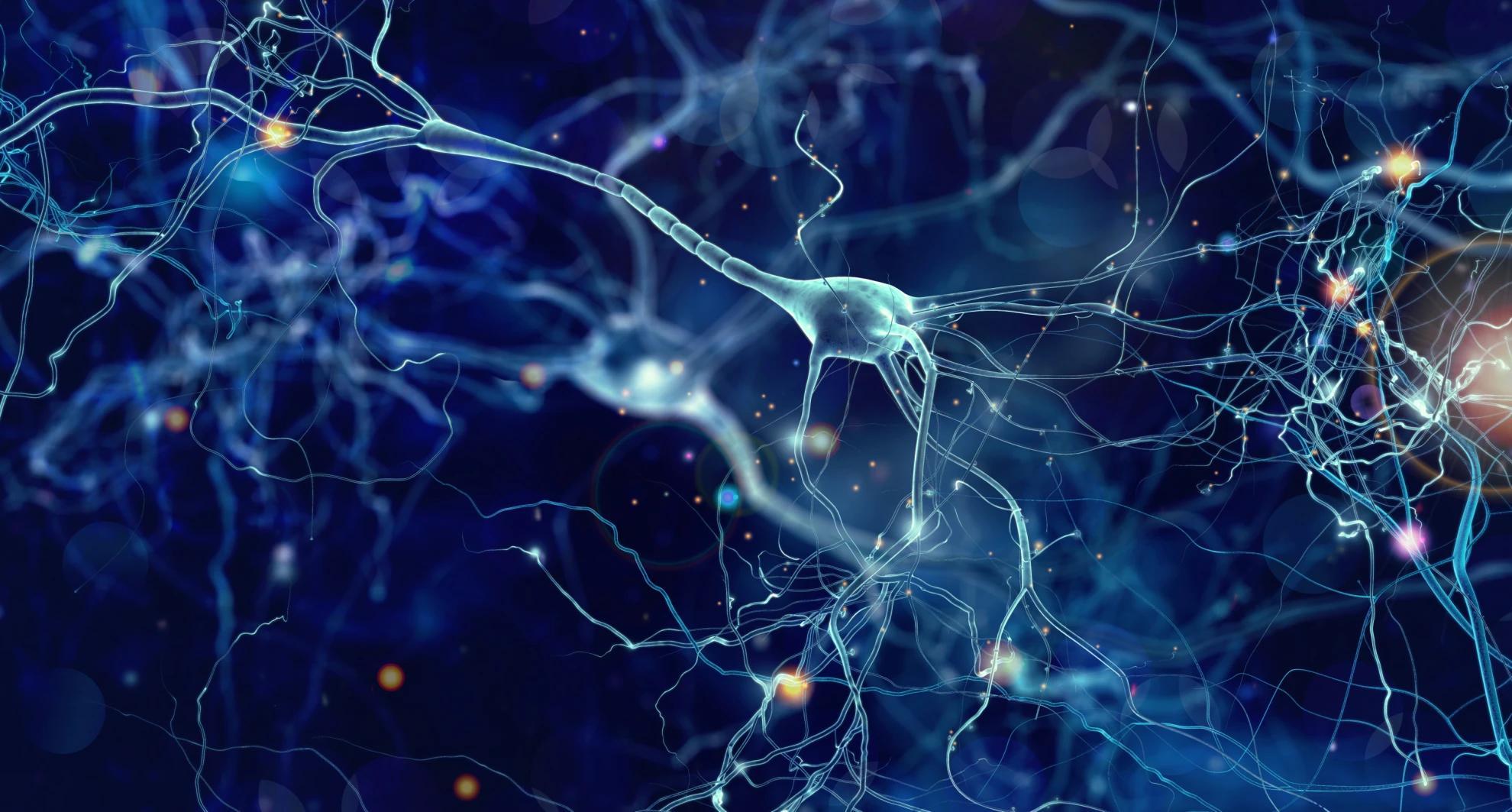 Микроглия и астроциты разделили обязанности при поедании мертвых нейронов