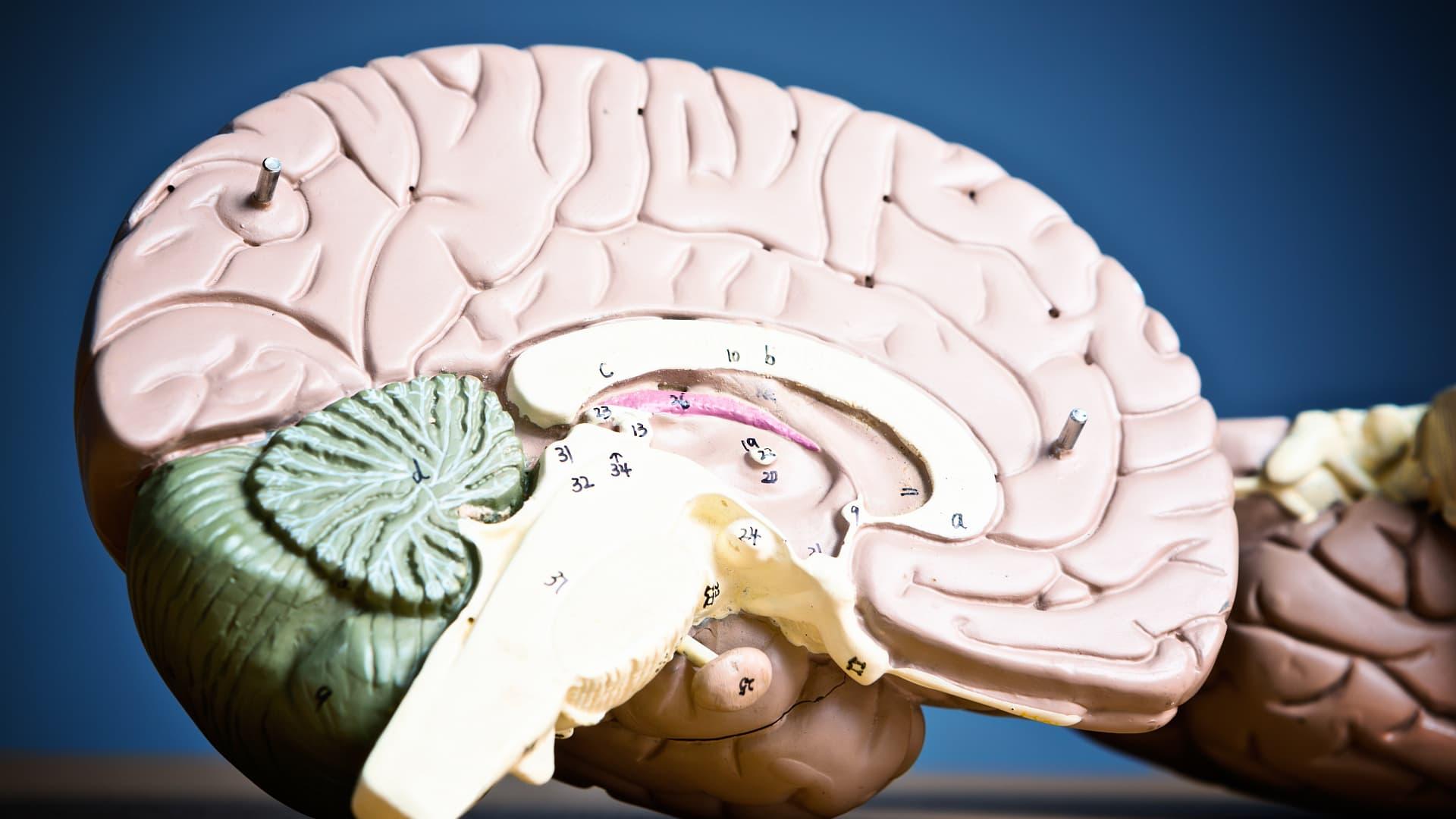 Выяснилось, как воспаление влияет на мозг новорожденных