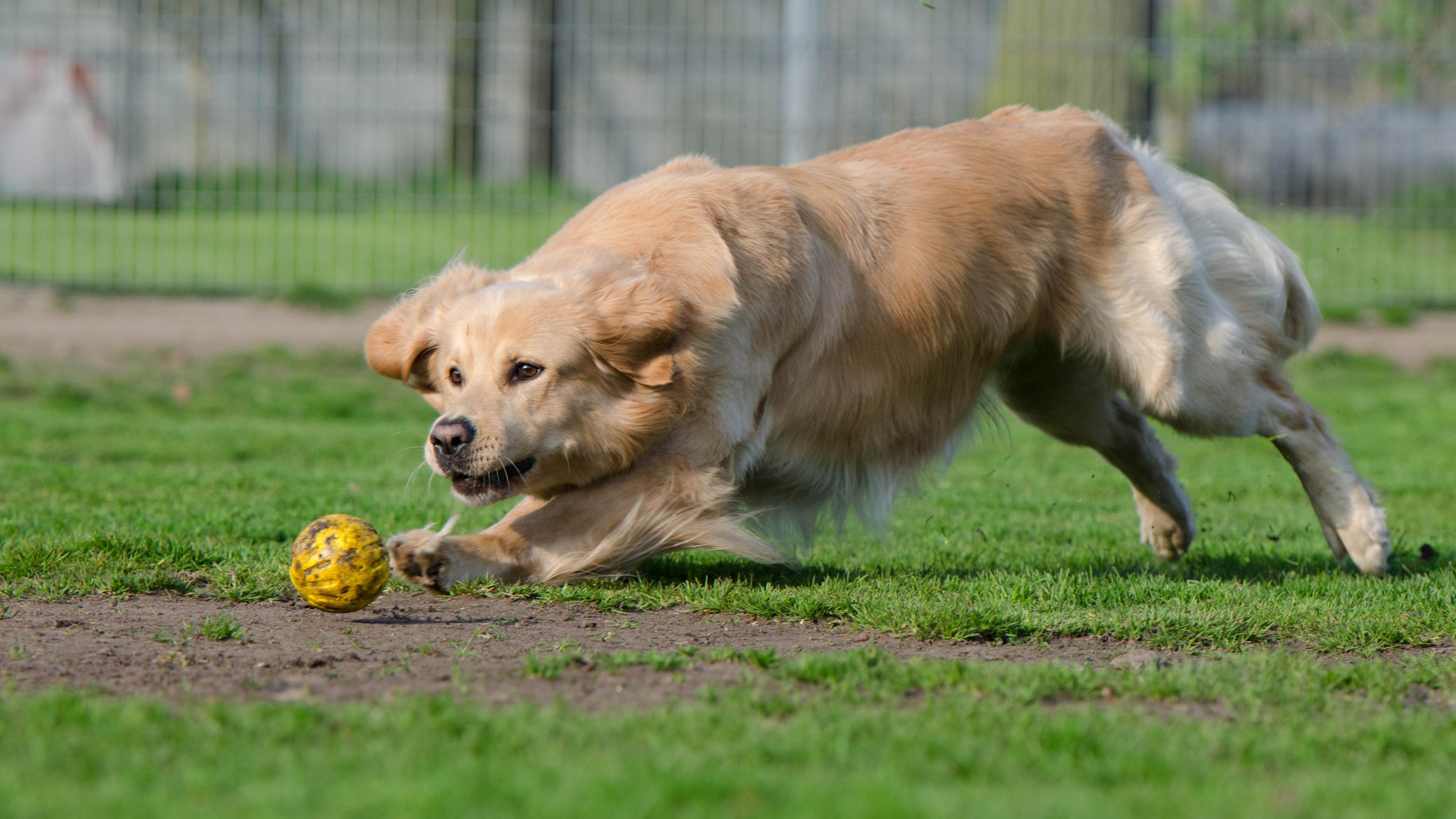 Собаки способны понимать последствия своих действий и отчасти имеют самосознание