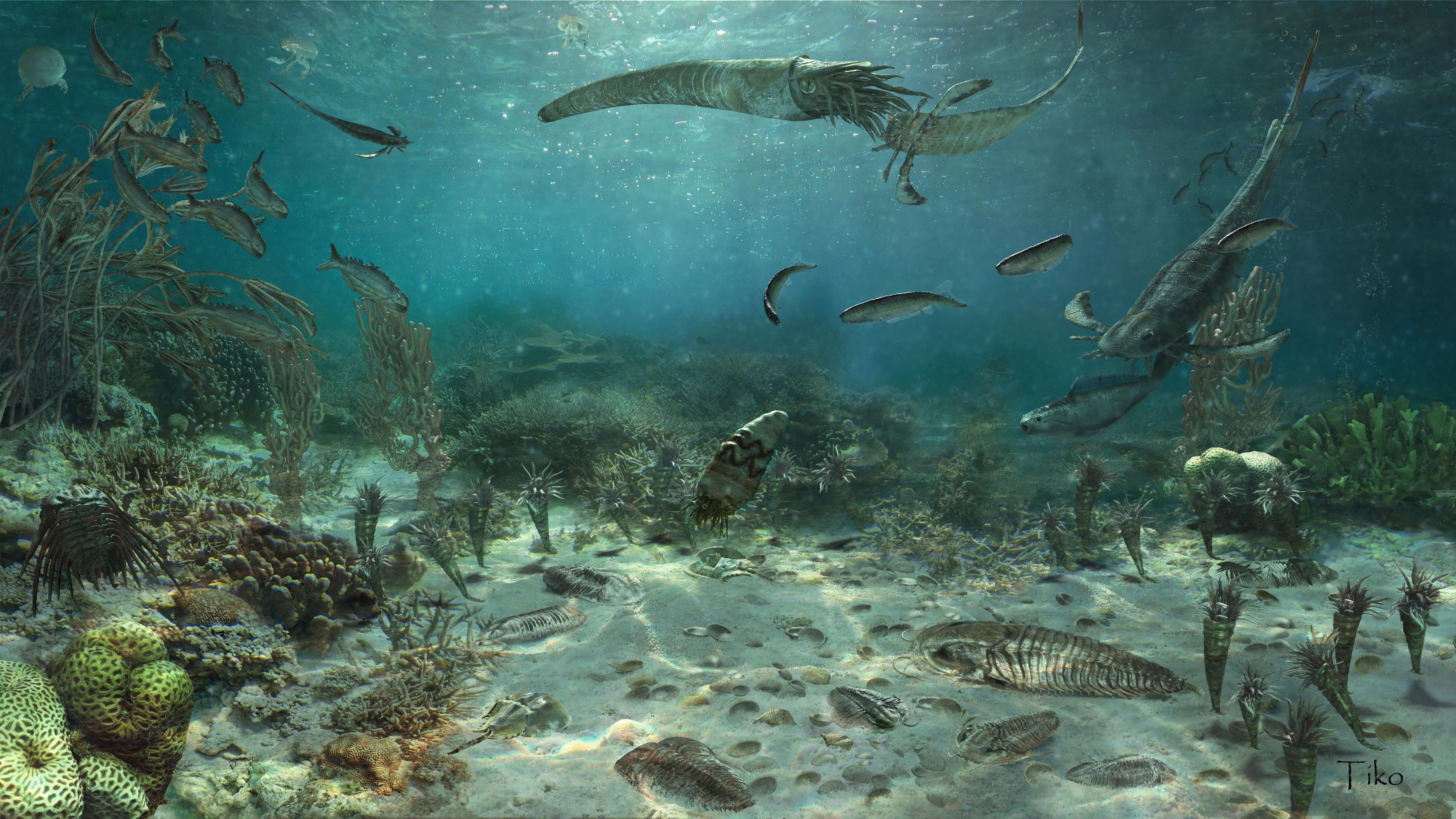 Изменения климата в раннем палеозое совпали с колебаниями биоразнообразия