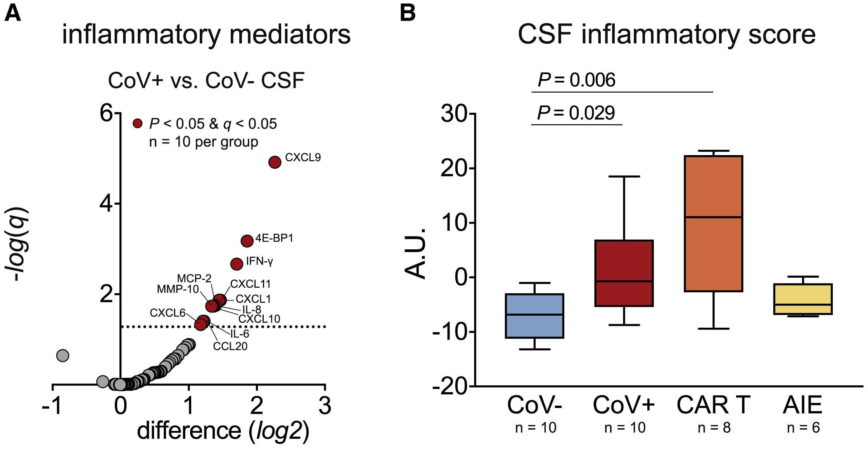 Провалы в памяти после ковида связали с цитокинами в спинномозговой жидкости